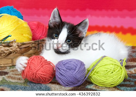 Black and white tabby kitten on carpet floor, bright striped background, balls of yarn in a basket, holding yarn with one paw. - stock photo