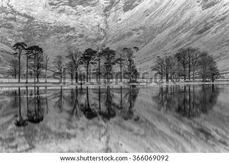 Black and white tranquil reflections of interesting pine trees at Buttermere in the English Lake District. - stock photo