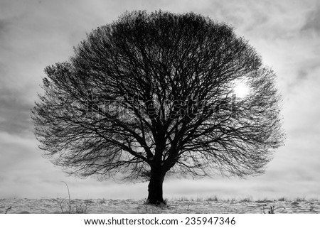 black and white tree stock images royalty free images vectors shutterstock. Black Bedroom Furniture Sets. Home Design Ideas