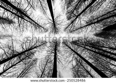 black and white trees silhouettes - stock photo