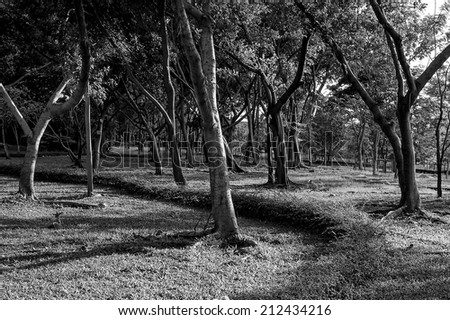 Black and white tropical forest in the morning - stock photo