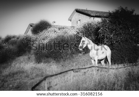 Black and white wild horse with shallow depth of field