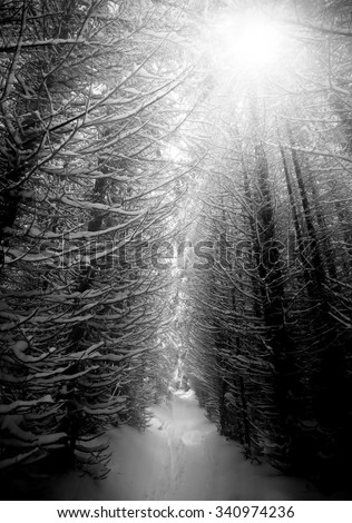 black and white winter forest, vertical landscape