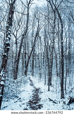 black and white winter snow trees forest path