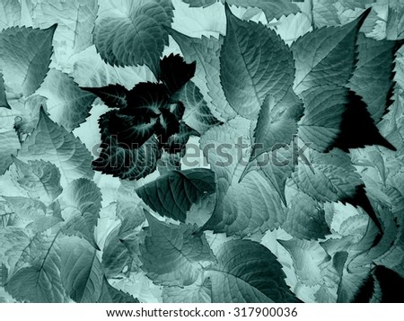 Black and white x-ray floral abstract hydrangea image