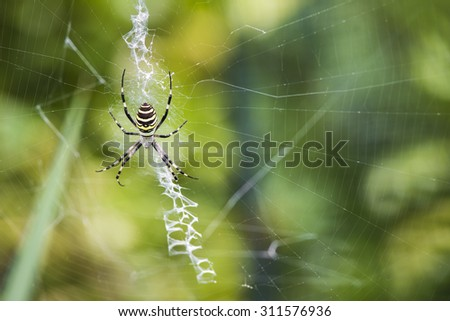 Black and yellow garden spider on web - stock photo