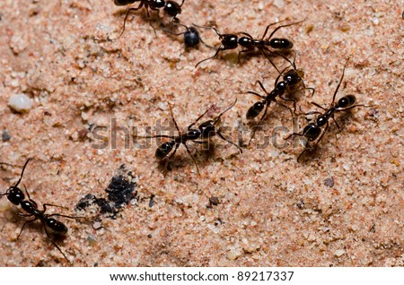 black ant in green nature or in the garden - stock photo
