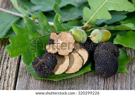 Black autumn truffles from France with leaves of oak, beech and hazel - tuber uncinatum - stock photo