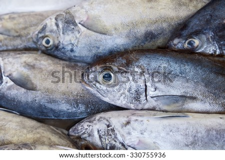 BLACK-BANDED TREVALLY fish at market