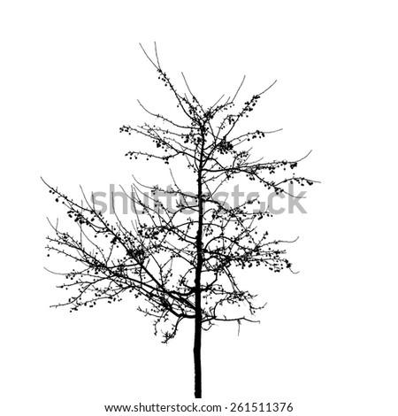 Black bare wild apple tree photo silhouette on white background - stock photo