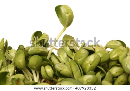 Black bean sprouts on white background - stock photo