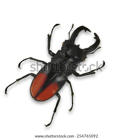 Black beetle isolated on white background - stock photo