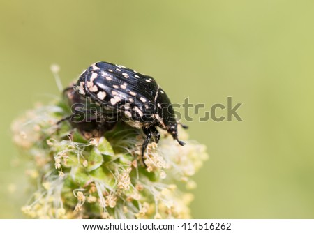 black beetle on a flower