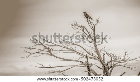 Black bird above tree branches