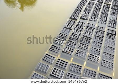 black boxes crab on soft-shelled crab farming ponds - stock photo