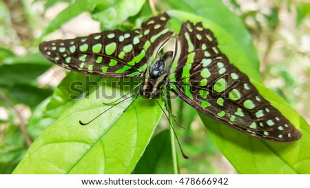 black butterfly with green spots on leaves