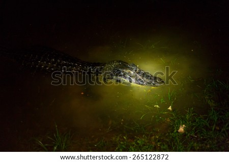 Black caiman by night , shot with flash light by night, this is how you see them from tourist canoe. - stock photo