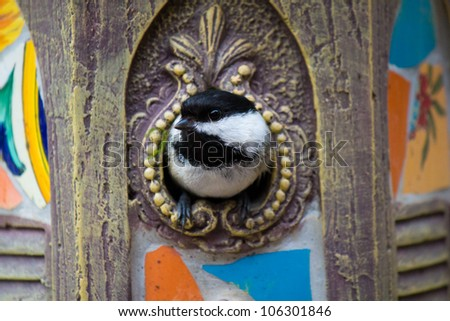 Black-capped chickadee in the birdhouse - stock photo