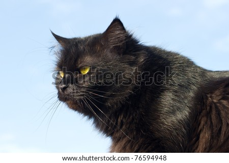 Black cat against the blue sky - stock photo