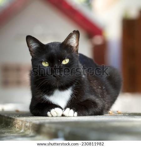 Black cat,Animal portrait - stock photo
