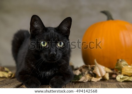 Black Cat Symbol Halloween Orange Pumpkin Stock Photo Edit Now