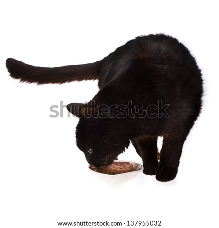Black cat eats cat food from a white bowl isolated on white background - stock photo
