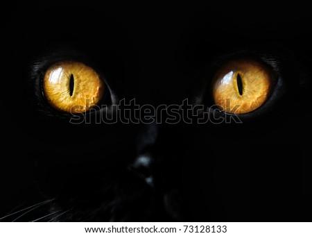 Black Cat Eye - stock photo