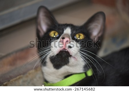 Black   cat   face  up  for    looking   something. - stock photo