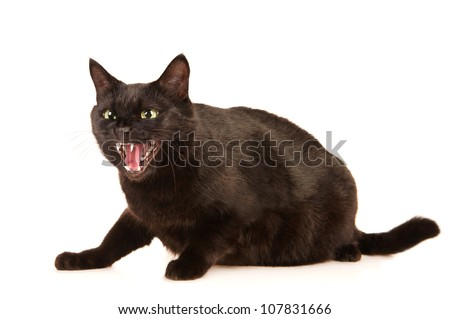 Black cat hisses, isolated on white - stock photo