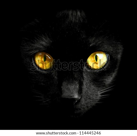 Black cat in dark close-up - stock photo