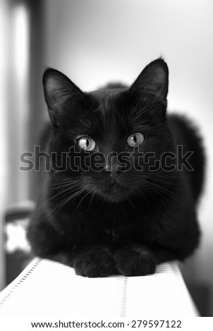 Black cat in dark close-up - stock photo