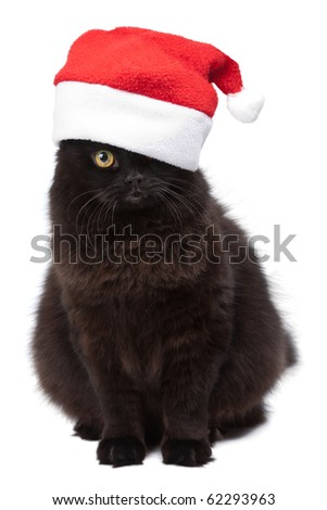 black cat in red cap isolated - stock photo