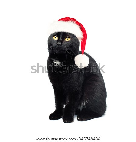 Black Cat in Santa Hat on White Background. Christmas Concept - stock photo