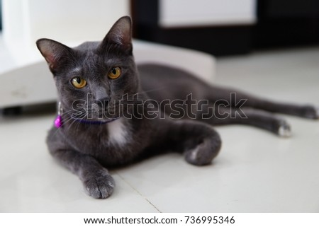 Black cat in thailand