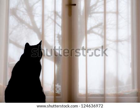 Black cat is sitting in a window - stock photo