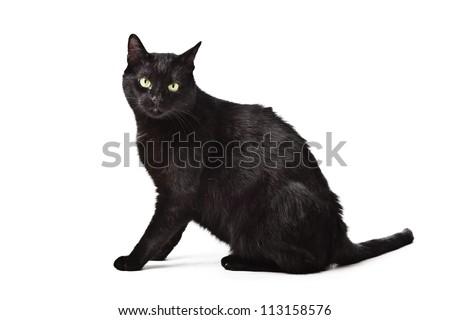 Black cat isolated on white background - stock photo