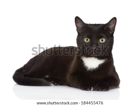 Black cat  looking at camera. isolated on white background - stock photo