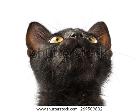 black cat looks up - stock photo