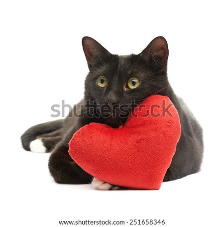 Black cat lying and using the toy red plush heart as a pillow, composition isolated over the white background - stock photo