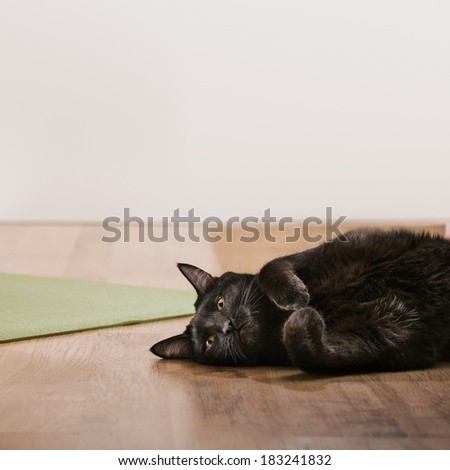 Black cat lying on floor - stock photo
