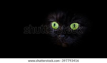 Black cat on black background with bright eyes
