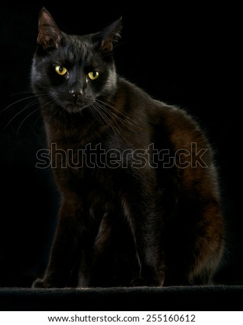 black cat on dark background beautiful night pet animal with spooky eyes halloween kitten - stock photo
