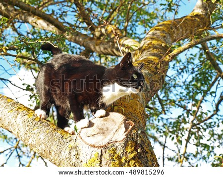 Black cat on plum tree in sunny day close up.