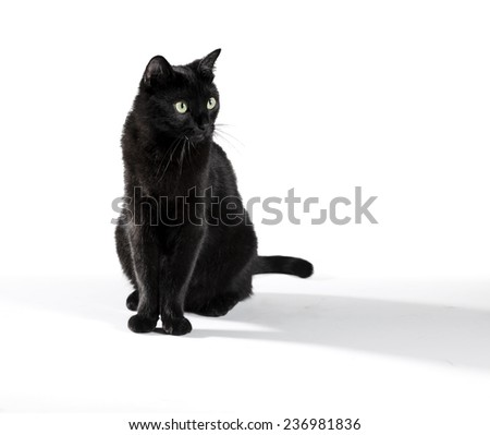 Black cat on white - stock photo
