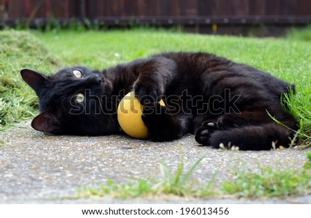 Black cat playing game in the garden - stock photo