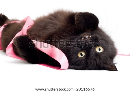 black cat playing with pink ribbon isolated - stock photo