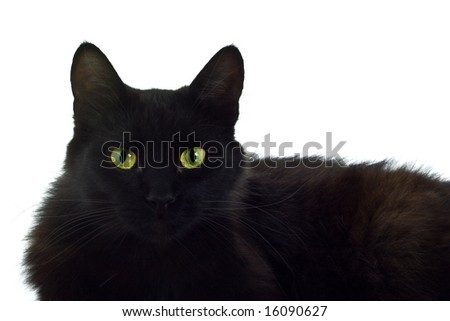 Black cat portrait isolated over white background