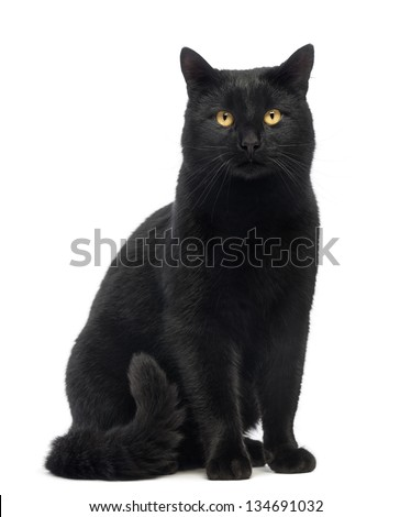 Black Cat sitting and looking at the camera, isolated on white - stock photo