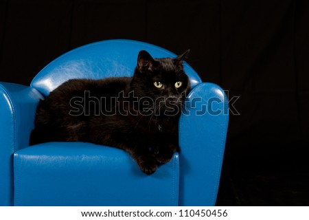 Black cat sitting in a blue mini chair with black background - stock photo