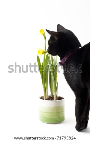 black cat sniffing yellow flower